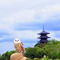 Photos: フクロウと五重塔