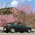写真: 我が家の205と桜