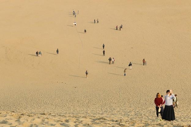 写真: 鳥取砂丘