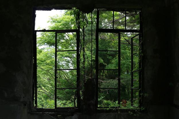 新緑を眺める