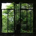 写真: 新緑を眺める