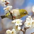 Photos: 梅薫る三月