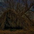 写真: 倒木 (1)
