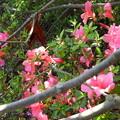 写真: 木漏れ日に咲く