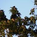 写真: 鳥 (1)