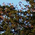 Photos: 鳥 (3)