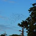 写真: 鳥 (5)