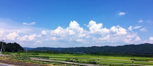 熱いぞ 気温41度 青い空にわき上がる雲が好き (2)