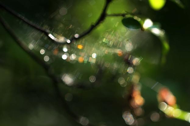 Photos: 雨上がりの朝、蜘蛛の巣が風に揺れる