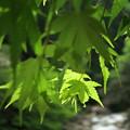 Photos: 新 緑