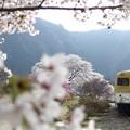 Photos: さくら#4
