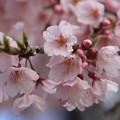 雨上がりの花弁