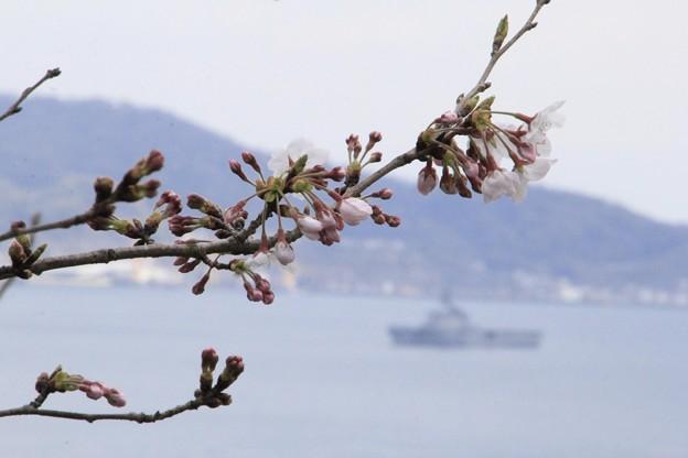 桜と護衛艦