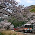 写真: 塩之沢駅の桜