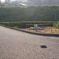 写真: 日本亀 横断中