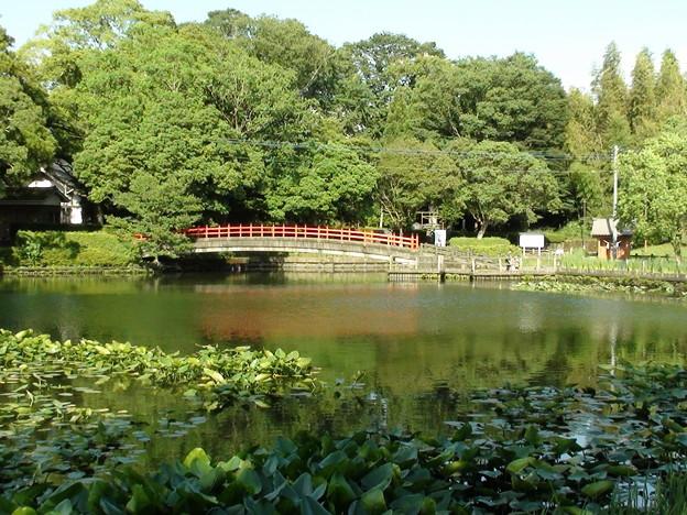 早水公園の池