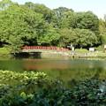 写真: 早水公園の池