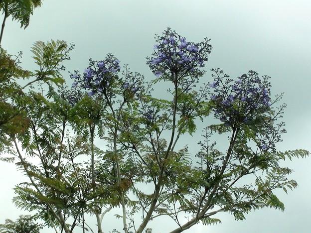 南郷駅のジャカランダの花