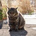 鶴見線浅野駅の猫