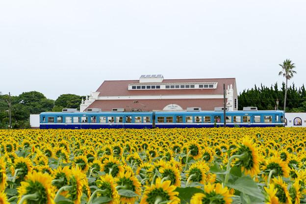 銚子電鉄 犬吠駅