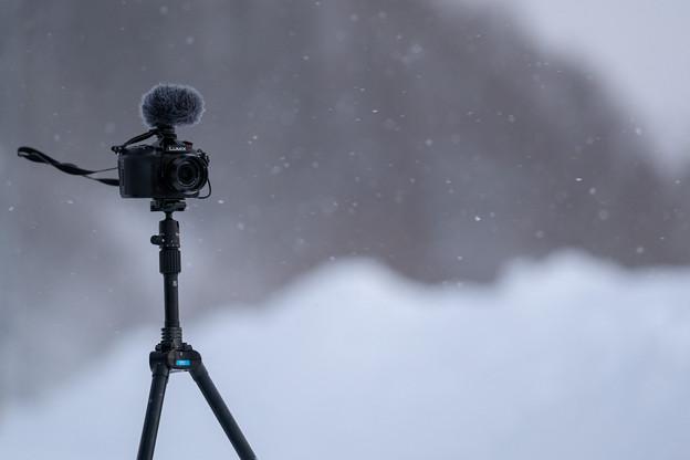 Photos: 風にも雪にも負けず