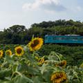 Photos: 和歌山線 隅田駅~大和二見駅