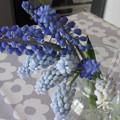 写真: 切り花にしたムスカリ