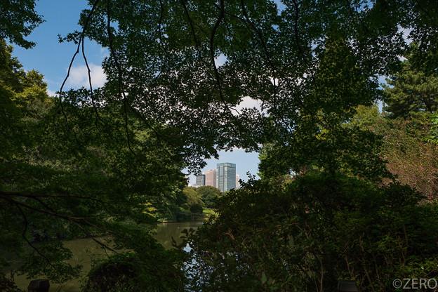 LEICA Q新宿御苑-2