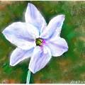 写真: ニラの花