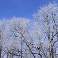 写真: 霜氷花