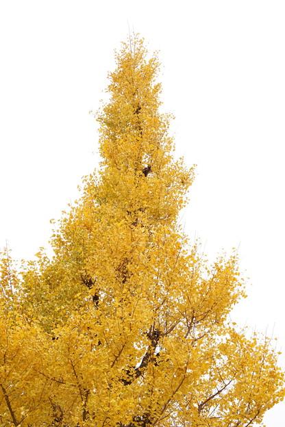 そびえ立つ黄。