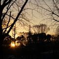 写真: 木立より出ずる暁色 2