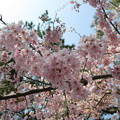 Photos: 14.04.10.鴻神社(鴻巣市)