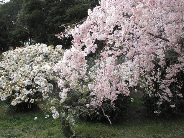 14.04.10.水城公園(行田市)
