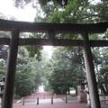 Photos: 砥鹿神社(豊川市)