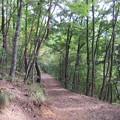 妻女山(赤坂・赤坂山。斎場山・祭場山。長野市松代町)