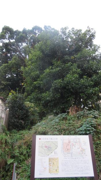 小田原古城 本曲輪(物見台。神奈川県)