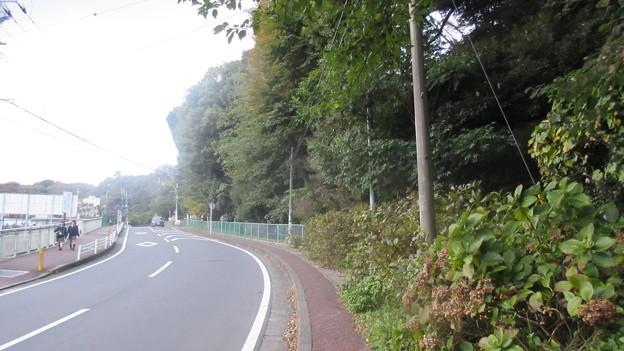 小田原古城 南曲輪(二の丸惣構堀。神奈川県)