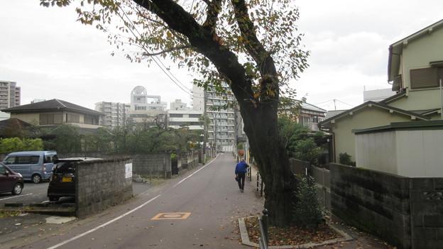 小田原城 堀切・評定所曲輪方向(神奈川県)