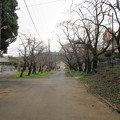 Photos: 大泉寺/小山田氏館・小山田城 馬場(町田市)