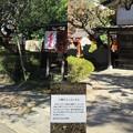 Photos: 三囲稲荷神社(向島2丁目)神狐