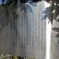Photos: 三囲稲荷神社(向島2丁目)宗因白露句碑