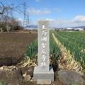 上野国分尼寺跡(前橋市)