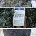 Photos: 箕輪城(高崎市)蔵屋敷下・橋台跡