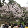 Photos: 16.03.28.皇居乾通り