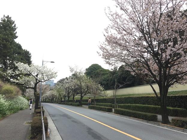 Photos: 16.04.02.代官町通り(千代田区千代田)