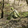 貴布禰総本宮 貴船神社(左京区)烏帽子岩