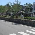 鶴岡八幡宮参道 段葛(鎌倉市)