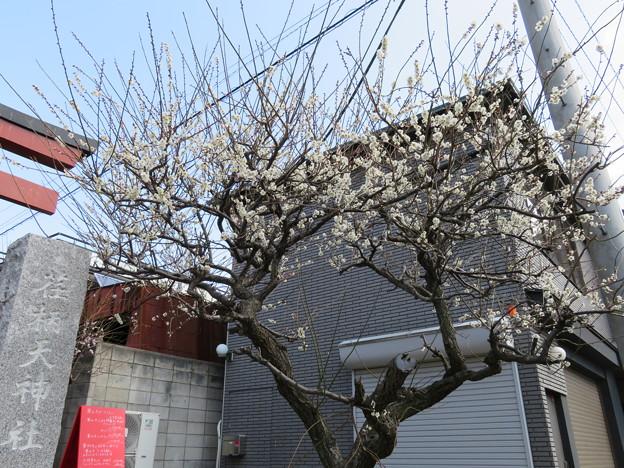 荏柄天神社(鎌倉市)一の鳥居