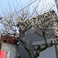 Photos: 荏柄天神社(鎌倉市)一の鳥居